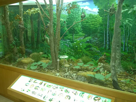 Il Museo Naturalistico