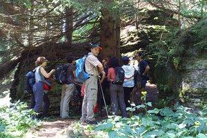 bosco roccia guidealtopiano w n1