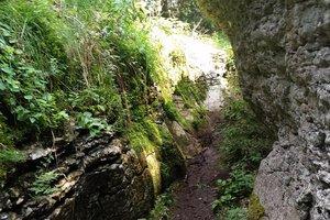 bosco roccia guidealtopiano w n7